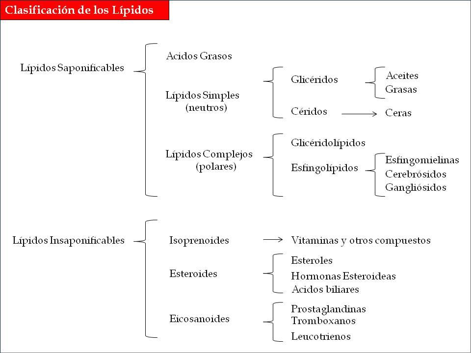 Clasificación Actualizada De Los Lípidos Iidenut